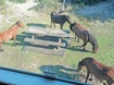 View of Wild Spanish Mustangs from Screened-In Deck