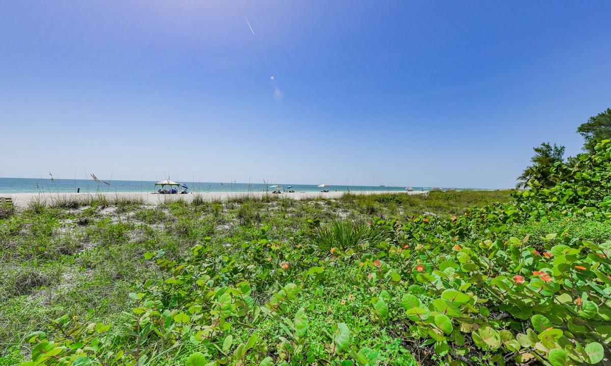 Beachfront Coconuts - AMI Locals