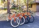 Bikes-Deer Lane 8