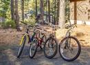 Bikes-Lynx Lane 5