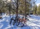 Yellowpine-17-bikes-Yellow Pine 17
