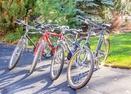 Bikes-Tan Oak 15