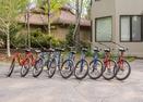 Bikes-Blue Goose 10