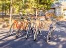 Bikes-Camas 16